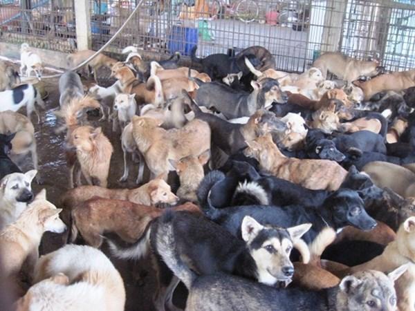 Kết quả hình ảnh cho nuôi chó thịt