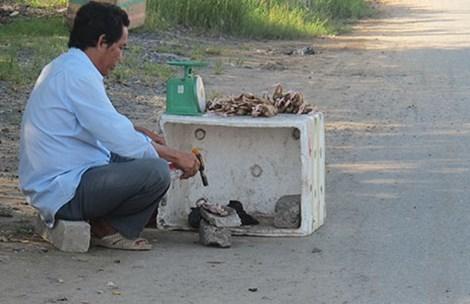 Biến chim cút nuôi thành đặc sản chim rừng