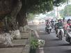 Hà Nội chặt thêm hàng loạt cây xanh đường Cầu Giấy
