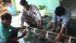 Đồng Nai: Vây bắt cá sấu xổng chuồng ra hồ Trị An