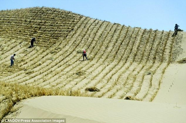 Trung Quốc, sa mạc Gobi, vạn lý trường thành xanh, bão cát