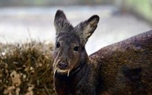 Những động vật mới phát hiện gây sửng sốt nhất 2014