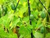 2014: Chị em phát cuồng mốt trồng cây cảnh tí hon