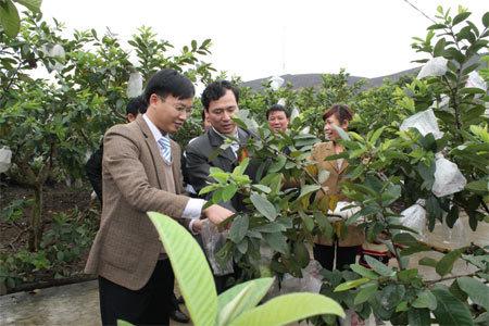 Quảng Ninh đẩy mạnh phát triển nông nghiệp hàng hóa