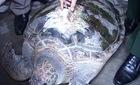 Bắt được rùa biển hơn 50kg gắn định vị của Trung Quốc