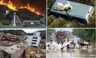 Bao nhiêu người thiệt mạng do thảm họa năm 2014?