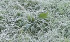 Sa Pa lạnh 0 độ, phủ trắng sương muối