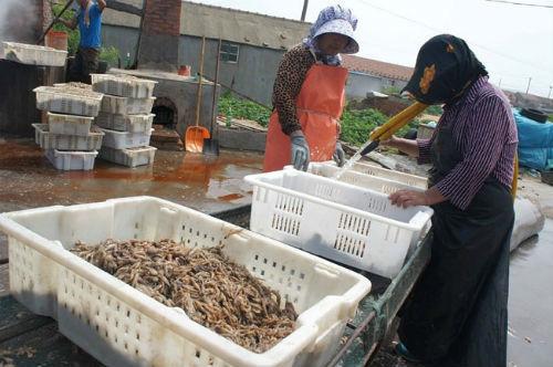 tôm-khô, tôm-thối, tôm-ươn, hóa-chất, hải-sản, cá-khô, rùng-rợn, công-nghệ, ung-thư, thực-phẩm-bẩn