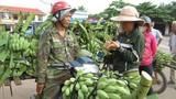 Sang Lào trồng chuối kiếm tiền tỷ