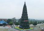 Ngắm cây thông Noel 'khủng' nhất xứ Nghệ