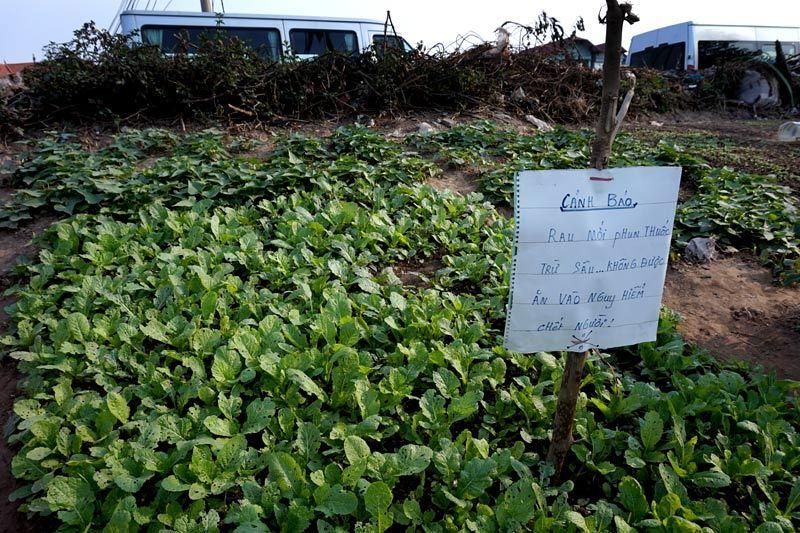 Vườn rau, Thủ đô, Hà Nội, đê điều