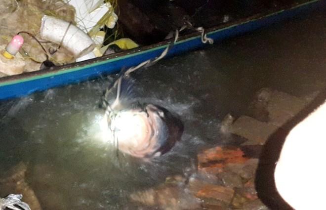 Bắt được cá hô 90 cân bán ngay giá 2 triệu đồng/kg