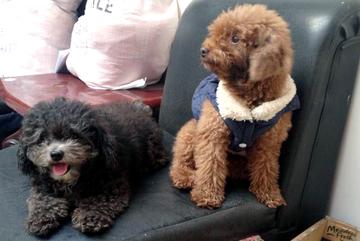 Áo hàng hiệu, khăn sành điệu: Chó cưng nhà giàu đón rét