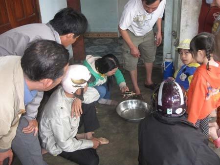 Rùa vàng 300 triệu/kg ở Phú Yên