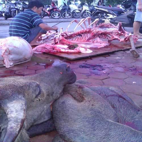 Chiêu hô biến trâu chết, lợn sề thành bò tươi của 'phù thủy đồ tể'