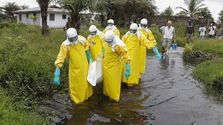Ebola, Tây Phi, đại dịch, WHO, nhập cảnh