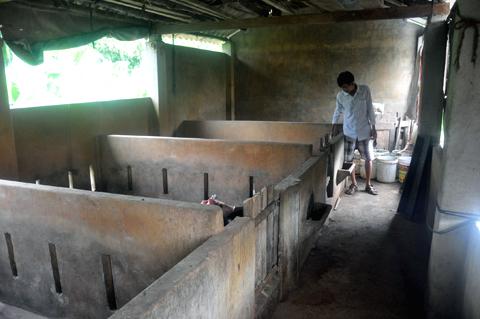 Chuyện lạ Quảng Nam: Trâu bò nhà lầu, người nhà cấp 4