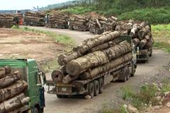 Hàng trăm xe gỗ ùn ứ ở cửa khẩu vì 'công văn lạ'