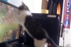 (Clip) Game thủ khốn khổ vì mèo cưng cũng đòi chơi game