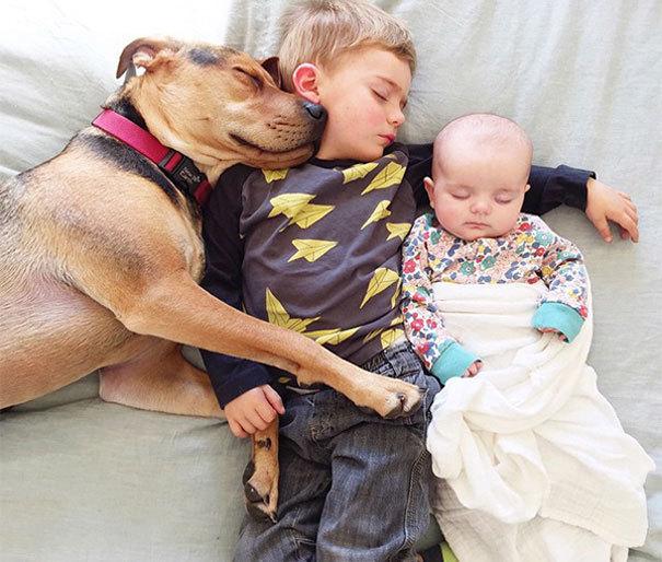 ảnh đẹp, thiên thần, trẻ em, động vật