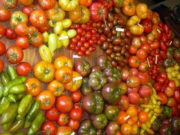 cà chua, ban công, ch�u cảnh
