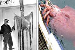 Tâm điểm KH: Lộ kích thước thực của các quái vật biển