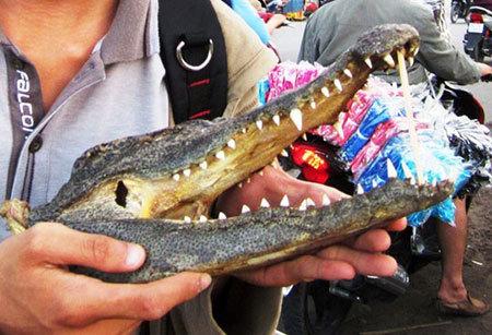 Thịt cá sấu rẻ như rau bán đầy vỉa hè