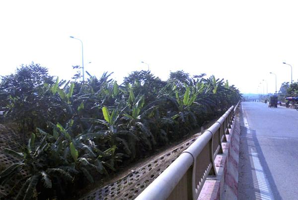 trồng-rau, đại-lộ-Thăng-Long, nông-dân, đền-bù, tận-dụng, khai-hoang