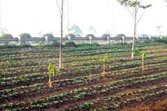 Ra giữa đại lộ đẹp nhất Việt Nam lập trang trại