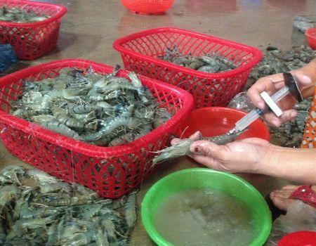 Trung tâm kiểm nghiệm và chứng nhận chất lượng nông lâm thủy sản Thanh Hóa