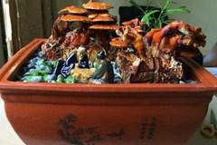 Nấm linh chi bonsai giá bạc triệu: Hàng 'độc' chơi Tết