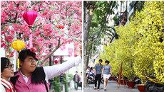 """Mai, đào """"nở rộ"""", không khí Tết ngập tràn đường phố Sài Gòn"""
