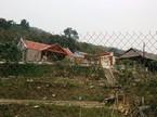 Dê hộ nghèo 'lạc' vào trang trại bí thư huyện