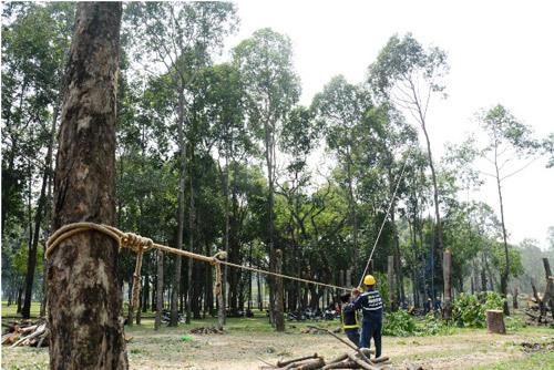 """""""Xẻ thịt"""" cây xanh làm đường, công viên thành xưởng gỗ"""