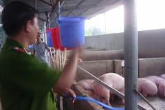 Hàng trăm con heo bị tiêm thuốc ngủ, bơm nước để tăng trọng