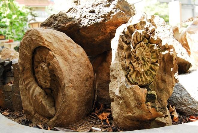 Hòn đá phát sáng giá trăm triệu ở Đồng Nai