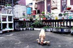 Trồng cây, thả cá, nuôi gà giữa trung tâm Thủ đô