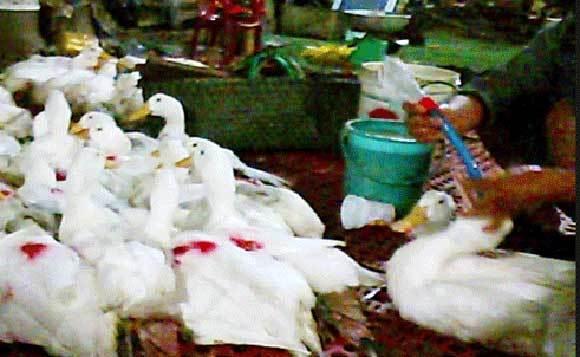 Táo Mỹ nhiễm khuẩn chết người, tôm 'bẩn' bán cho người Việt