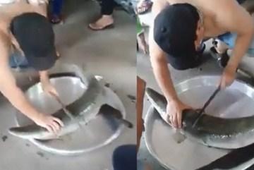 Đặc sản cá 'tôn ngộ không' cưa bằng dao không đứt