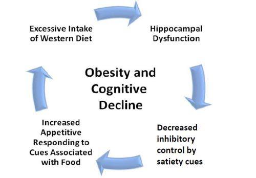 Ăn nhiều đường và chất béo gây hại não