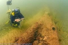 Kinh ngạc khu rừng cổ đại ẩn sâu dưới đáy biển
