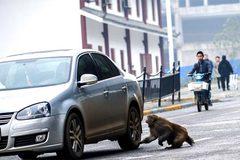 Cảm động cảnh khỉ ăn xin giữa đường