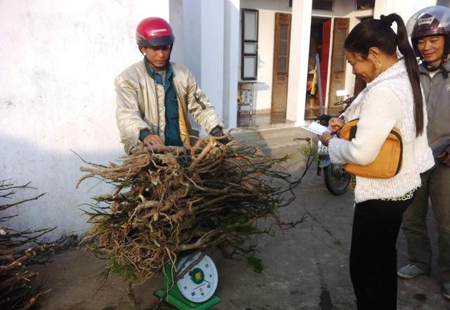 Bể rượu 500 lít ngâm củ đinh lăng khủng nhất Việt Nam