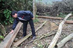 Để dân chiếm 324ha đất rừng, huyện tìm cách 'đền' cho DN