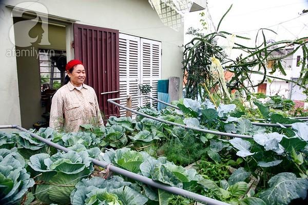 Ngắm vườn rau 40m² ở sân thượng đủ ăn cho 4 hộ gia đình ở Hà Nội