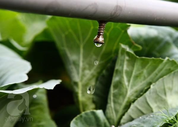 trồng rau, ban công, sân thượng