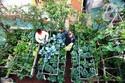 Khu vườn trên sân thượng giữa phố đủ ăn cho 4 hộ gia đình