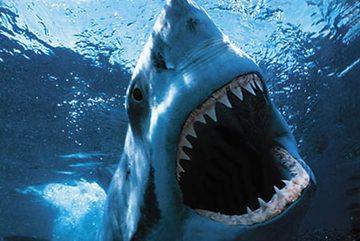 Phát hiện khả năng săn mồi đáng sợ của cá mập