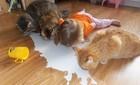 Chùm ảnh bé bắt chước động tác của thú cưng siêu đáng yêu