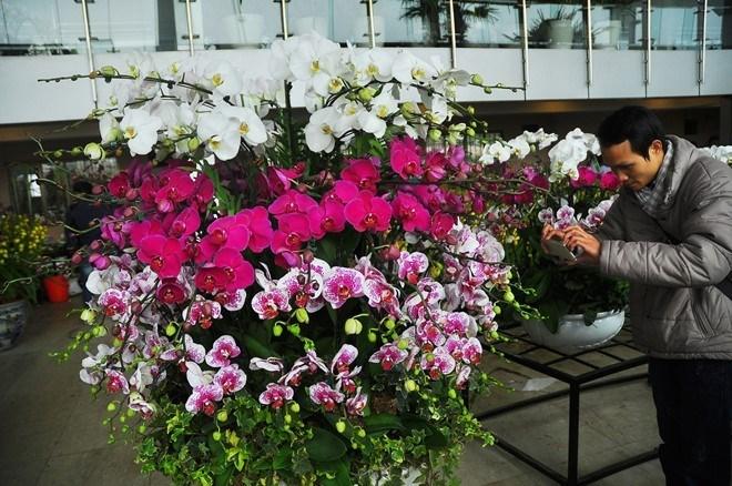 Tết, hoa-Tết, chơi-Tết, phong-lan, cây-cảnh, nhập-khẩu, ngoại-nhập, hút-khách, Thái-Lan
